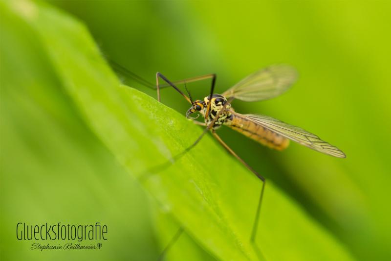 makrofotografie-insekten-naturfotograf-gluecksfotografie