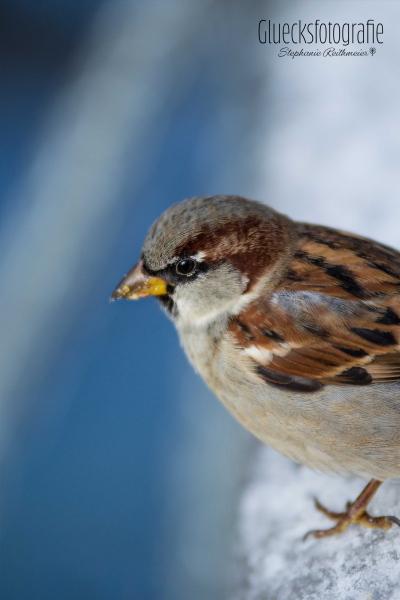 vogelfotografie-fink-naturfotograf-gluecksfotografie